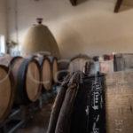 À l'époque où les hauts rendements étaient la norme, au Moulin, ses aïeux ont parfois privilégié des cépages aux rendements bas comme le Grenache noir ou le Macabeu. Les vins produits aujourd'hui répondent aux attentes de nombreux consommateurs qui cherchent des vins authentiques soit dans leur fruit et leur légèreté soit dans leur puissance équilibrée. L'intuition de ces anciens rappelle alors que la modernité n'est peut-être pas toujours là où on la croit.